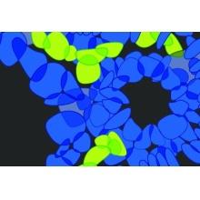 Ancell/anti-CD155(PVR, ANC6A3)/100 g/350-030