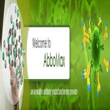 abbomax/CDC25b(pS42)/100ug/601-610