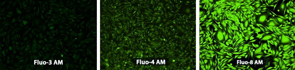 AAT Bioquest/Fluo-8®, AM/21080/1 mg