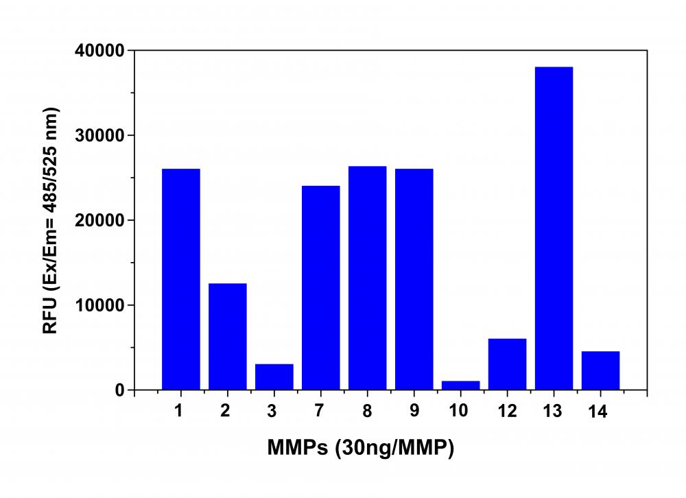 AAT Bioquest/Amplite™ Universal Fluorimetric MMP Activity Assay Kit *Green Fluorescence*/13510/100 Tests