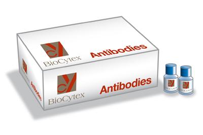 Biocytex/Fiche Contrôle Isotypique IgG1, clone 2H11/2H12, purifié/1 ml/5108-P