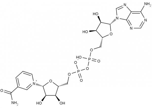 Biomol/NAD+, free acid/1 g/16110.1