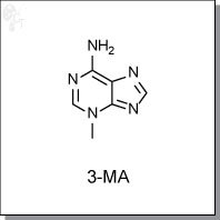 Cellagentech/3-MA/C0362-10/10 mg (powder)