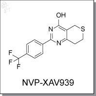 Cellagentech/NVP-XAV939 | Wnt/β-catenin Inhibitor/C9289-2s/2 mg (10 mM solution in DMSO)