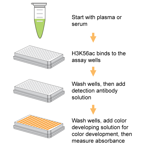 Epigentek/EpiQuik Circulating Acetyl Histone H3K56 ELISA Kit (Colorimetric)/P-3138-96/96 assays