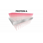 Protein Ark/Optima PRO-D Protein A 96 well Screen (2 plates)/2 plates/PAL-HT-PA-2D