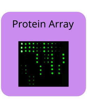 RayBiotech/Lung Cancer IgG Autoantibody Array G1/8 Sample Kit/PAH-LCAG-G1-8