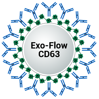 SBI/CD63 Exo-Flow capture kit (Magnetic streptavidin beads, CD63-biotin capture antibody, Wash and Elution Buffers, Exo-