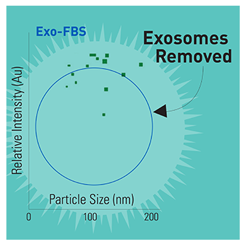 SBI/Exosome-depleted FBS Media Supplement/EXO-FBS-250A-1/250 mL