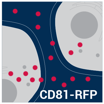 SBI/pCT-CD81-RFP (pCMV, Exosome/Secretory, CD81 Tetraspanin Tag; pre-packaged virus)/CYTO125-VA-1/>2x10^6 IFUs