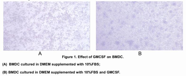 Uscnk/Active Colony Stimulating Factor 2, Granulocyte Macrophage (GM-CSF)/10µg/APA045Mu01