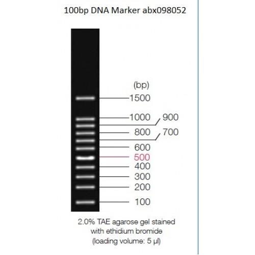 Abbexa/100bp DNA Marker/2.5 ml/abx098052-2.5 ml