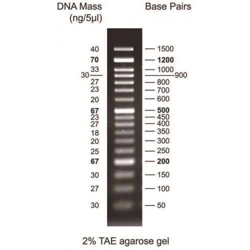 Abbexa/50-1500 bp DNA Marker/10 × 500 µl/abx299703-10 × 500 µl