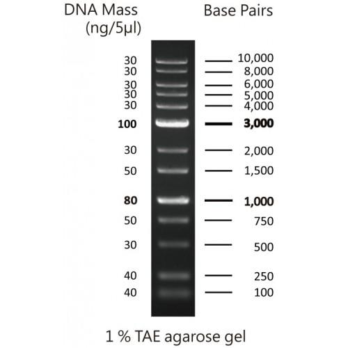 Abbexa/0.1-10 kbp DNA Marker/10 × 500 µl/abx299704-10 × 500 µl