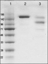 Abbiotec/Human IgE/250205/1 mg