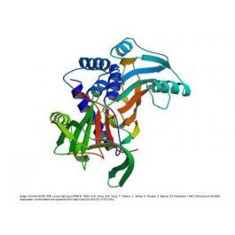 BBI Solutions/Alpha 1 anti chymotrypsin//P159-5