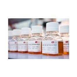 immunoreagents/Immunoglobulins (all) Depleted Serum//SF505-2