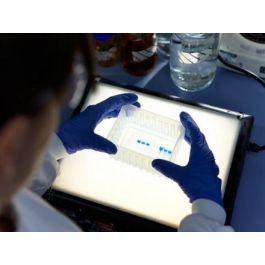 BBI Solutions/CA19-9 Cancer Antigen//P291-4