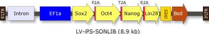 Biosettia/LV-iPSC-SONLIB/Nucleic Acid Purification/iPSC-v4F08m