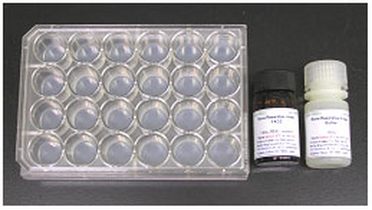 Cosmo/Bone Resorption Assay Kit 24/1 Kit/CSR-BRA-24KIT