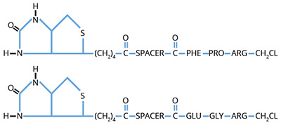 Haematologic Technologies/Biotinylated EGR-chloromethylketone/BEGRCK-06/1 mg