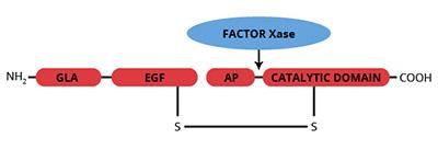 Haematologic Technologies/Bovine Factor X/BCX-1050/100 µg