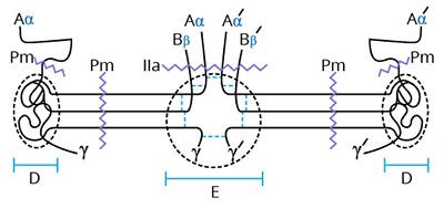 Haematologic Technologies/Human Research Grade Fibrinogen/HCI-0150R/2 mg