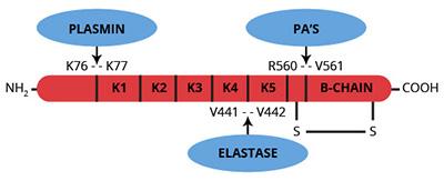 Haematologic Technologies/Human glu-Plasminogen CHOII/HCPG-0132/1 mg