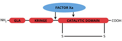 Haematologic Technologies/Human Prethrombin-1/HCP1-0011/1 mg
