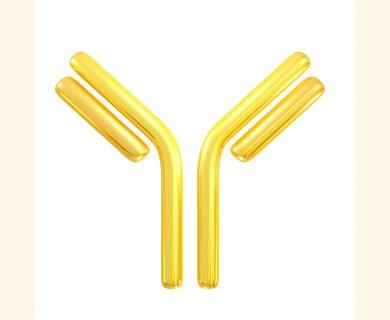 Immunology Consultants/anti-Bovine SAA Antibody (Mouse - Clone#1F12) - Monoclonal/1.0 mg/MSAA-10A-1F12