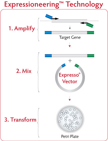 Expressioneering Protein Expression