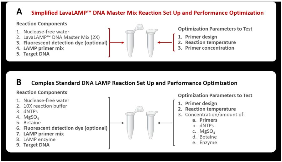 LavaLAMP-loop-mediate-amplification-reaction-easy