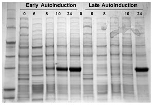 Direct autoinduction of recombinant protein