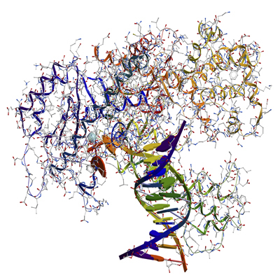 Molecular Innovations/TaqCurate Blended High Fidelity DNA Polymerase/BTAQ/500-units