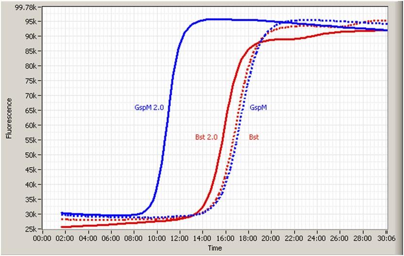 Pro-lab/40,000u GspM DNA polymerase @ 100u/ul/GSPM-003HC/1 Ea
