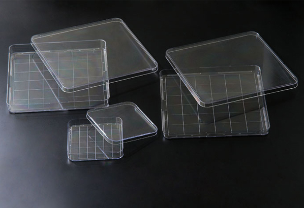 SPL life sciences/Square Dish/11245/1 Ea