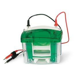 美国Bio-Rad伯乐Mini-PROTEAN®Tetra Vertical Electrophoresis Cell for Mini Precast Gels, 4-gel/1658004