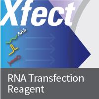 Clontech/Xfect RNA Transfection Reagent/1.2 mL/631450